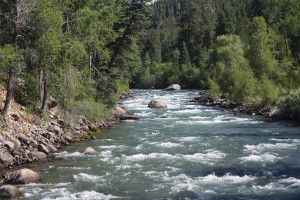 Animas River.Schatzl and Pickles
