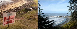 Polluted vs. pristine beach