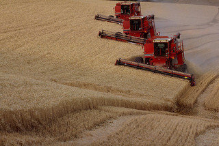 Combines on a big farm