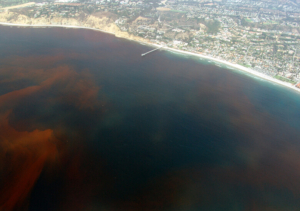 Picture of La-Jolla Red Tide (dead zone)