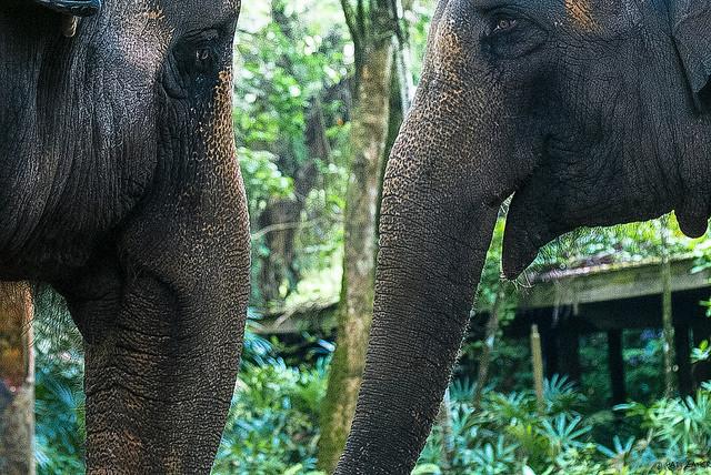 Elephants - Hadi Zaher