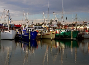 Fishing boats sitting in the marina