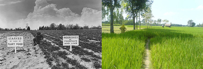 Left: A 1942 fertilizer experiment to build up soil fertility. Right: A green field in Bangladesh in 2011