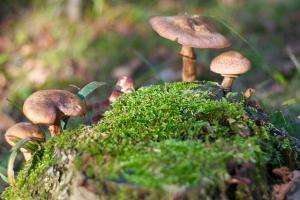 Mushroom Ecosystem