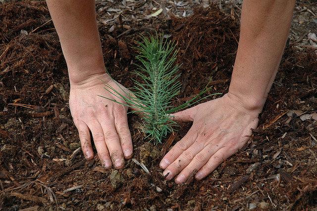 Reforestation - USFS Region 5