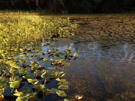 Wetlands - Lisa Jacobs